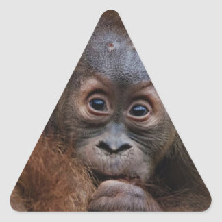 lovely orang baby triangle sticker