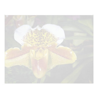 Lovely Orchid, paphiopedilum-hybrid (quiberon bay) Letterhead