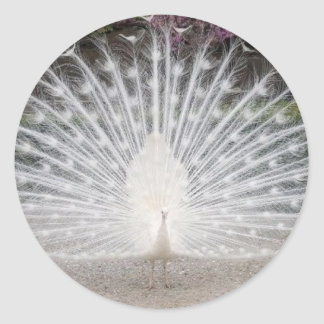 Lovely Peacock - Classic Round Sticker