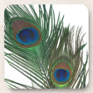 Lovely Peacock Feathers with White Drink Coaster