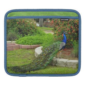 Lovely Peacock in a Garden iPad Sleeve