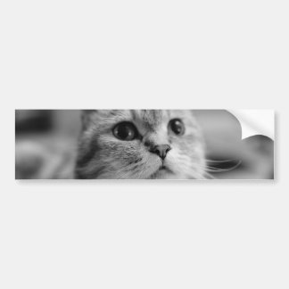 Lovely Pet Cat Bumper Sticker