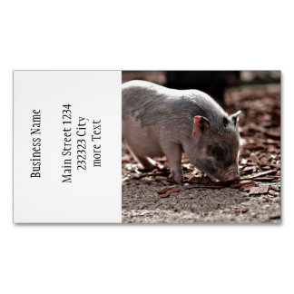 lovely piglet business card magnet
