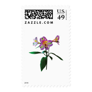 Lovely Pink Asiatic Lilies Postage