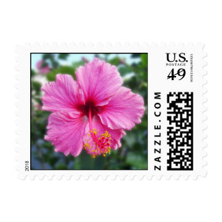 Lovely pink hibiscus USPS stamp