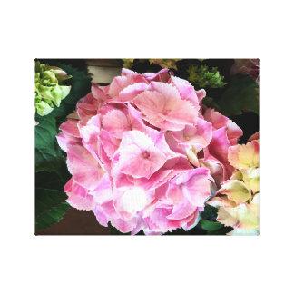 Lovely Pink Hydrangea on Canvas
