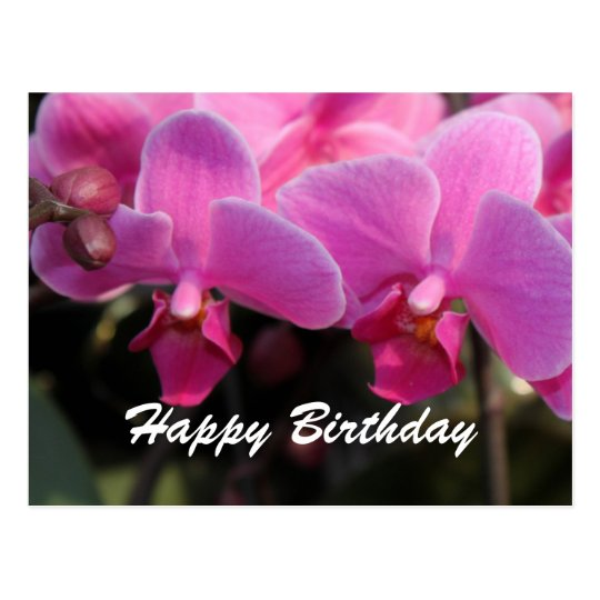 Lovely Pink Orchid Flowers. Birthday Wishes Postcard