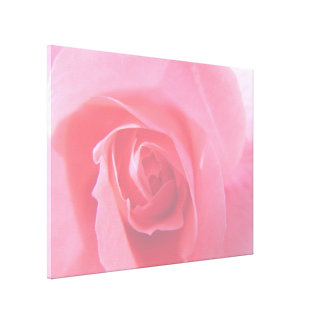 Lovely pink rose flower macro picture. canvas print