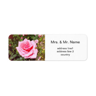 lovely pink rose flower with sweet  hearts labels