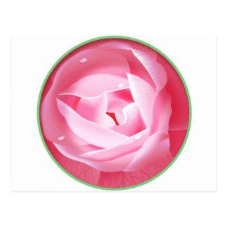Lovely Pink Rose Postcard