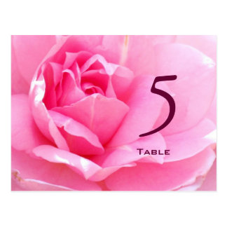 Lovely Pink Rose Table Number Postcard