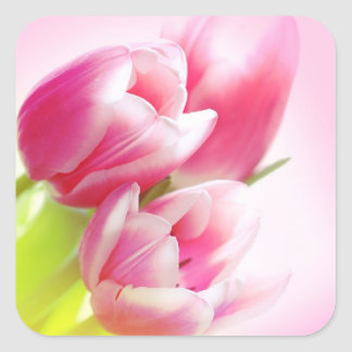 Lovely pink tulips square sticker