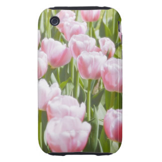 Lovely Pink Tulips Tough iPhone 3 Case