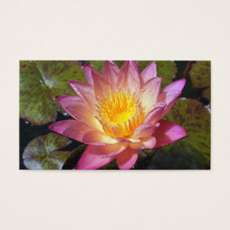 Lovely Pink Water Lily Business Card