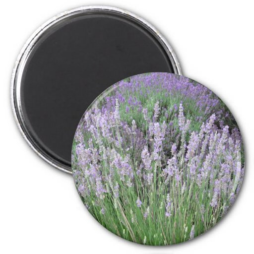 Lovely Provence French Lavender Fridge Magnet