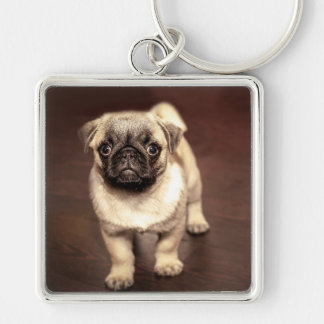 Lovely Puppy Pug, Dog, Pet, Animal Keychain
