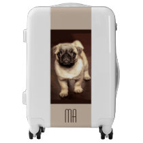 Lovely Puppy Pug, Dog, Pet, Animal Luggage