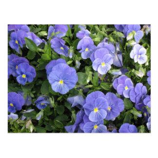 Lovely Purple Flowers Postcard