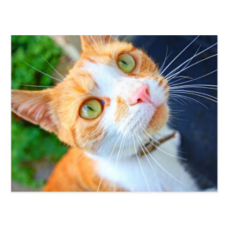 Lovely red cat with green eyes postcard