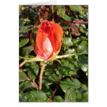 Lovely Red Rose with Raindrops Greeting Card