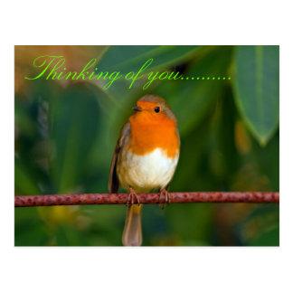Lovely Robin Bird Postcard