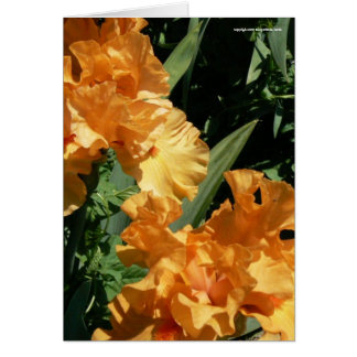 Lovely Senorita Iris Card