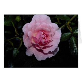 Lovely Shrub Rose 'Golden Wings' Greeting Card