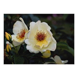 Lovely Shrub Rose Golden Wings Invitations
