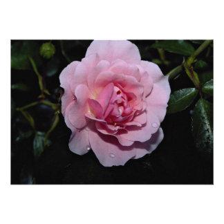 Lovely Shrub Rose Golden Wings Personalized Invites