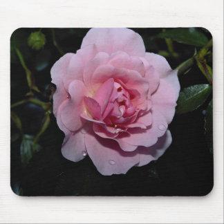 Lovely Shrub Rose 'Golden Wings' Mouse Pad