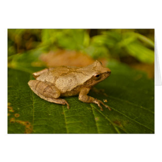Lovely Spring Peeper Card