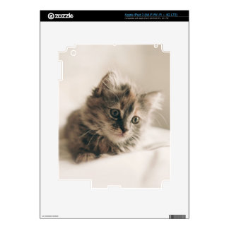Lovely Sweet Cat Kitten Kitty Decals For iPad 3