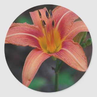 Lovely Tawny Daylily Apparel and Gifts Round Stickers