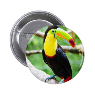 Lovely Toucan Button