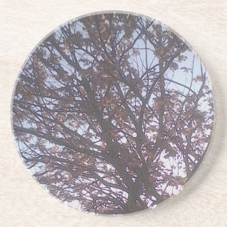 Lovely tree and a beautiful blue sky. drink coaster