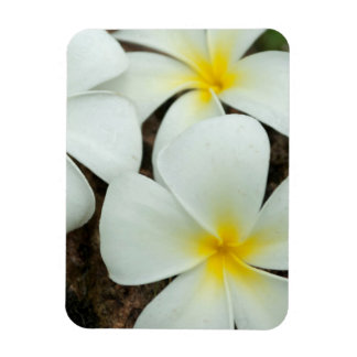 Lovely Tropical Blossoms In The South Pacific Magnet