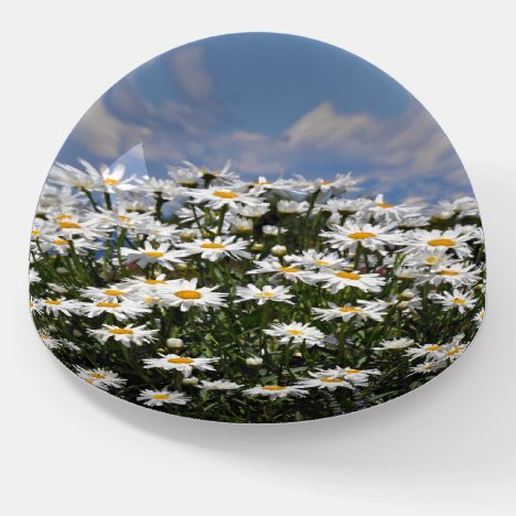Lovely white daisy garden paperweight