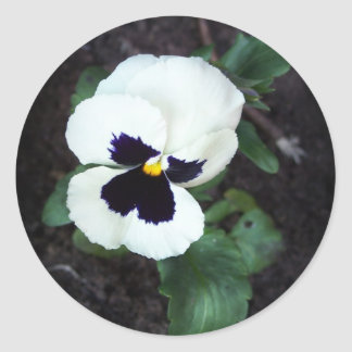 Lovely White Pansy Classic Round Sticker