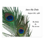 Lovely White Peacock Save the Date Postcard