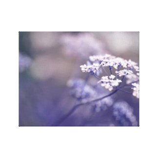 Lovely Wild Chervil Canvas Print