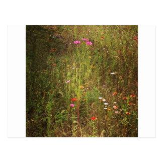 Lovely Wild Flowers Postcard
