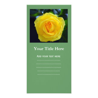 Lovely yellow rose flower photography. card