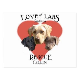 LoveofLabs5 Postcard