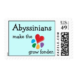 Lover_Abyssinians animal hace el franqueo del cora