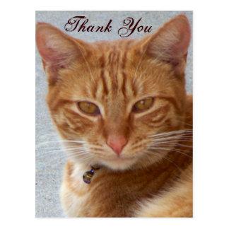 Lover_ del gato postales