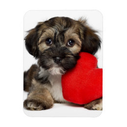 Lover Valentine Havanese Puppy Dog Magnet