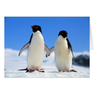 lovers penguins greeting card