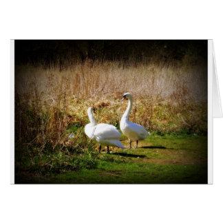 Lovey Dovey Swans Card