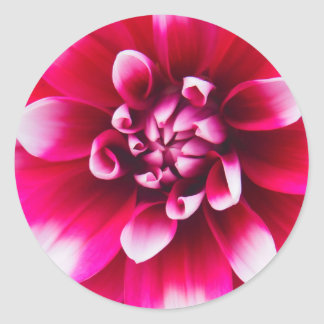 Lovey Pink and White Flower Classic Round Sticker