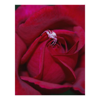 Loving the red rose and meaning letterhead template